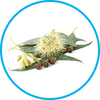 eucalyptus flower oil