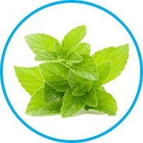 peppermint leaf oil